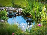 Criar o seu próprio jardim aquático