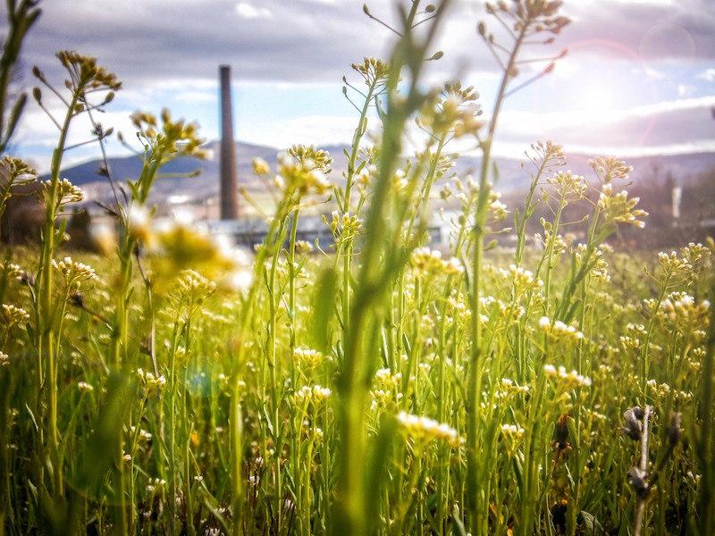 Luxembourg : des bâtiments publics plus écologiques