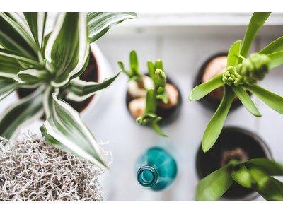 Indoor plants, allies for your health